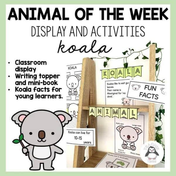 Animal of the Week KOALA