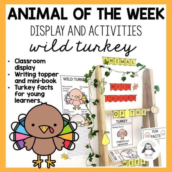 animal of the week turkey